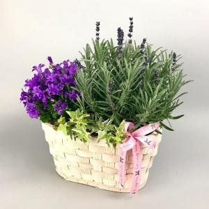 Scented Lavender Planter