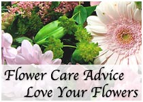 Love your flowers with our flower care advice